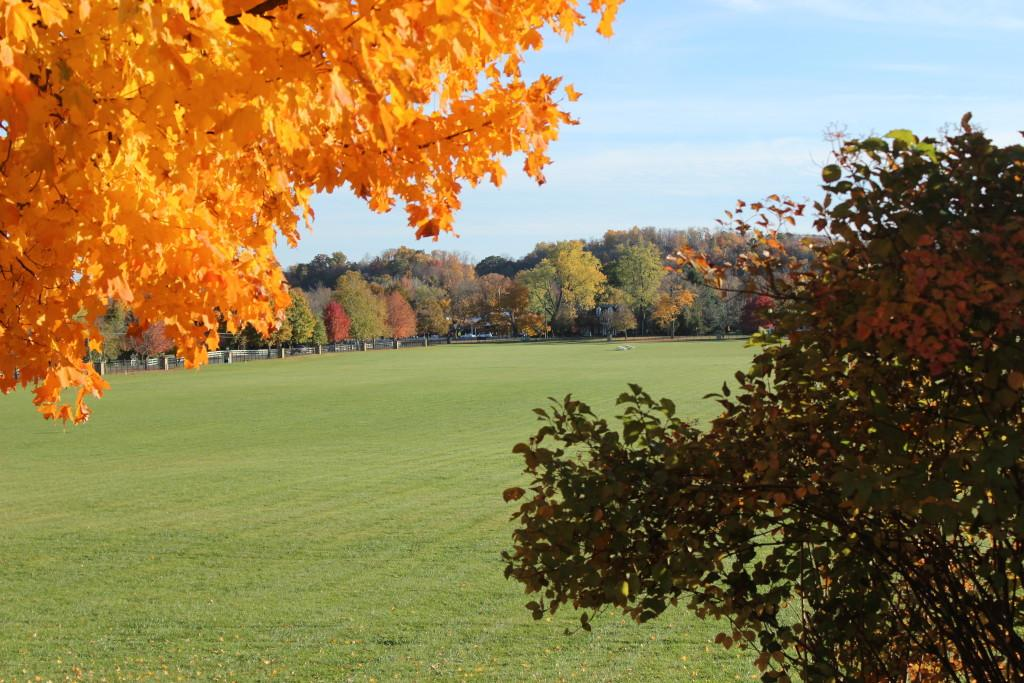 Five things to jump into this fall