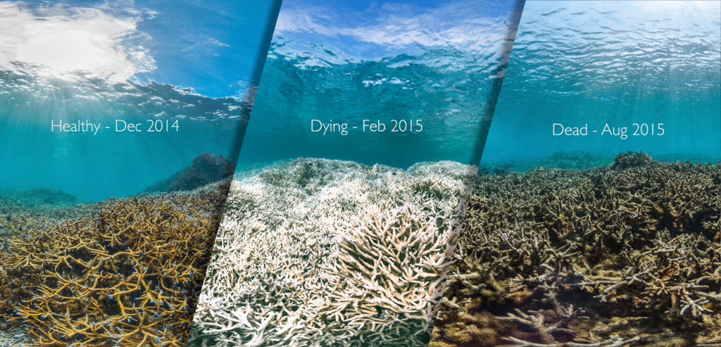 OPINION: The importance of coral